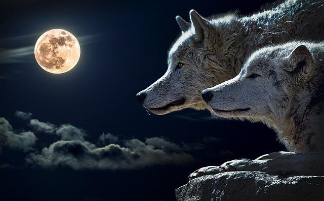 デボラ・シモンズ『狼を愛した姫君 』ディ・バラ家の物語(1)を読んだ感想