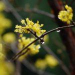 リサ・クレイパス『春の雨にぬれても』<壁の花シリーズ4>を読んだ感想