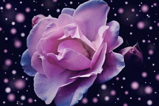 リンダ・ハワード『バラのざわめき』を読んだ感想