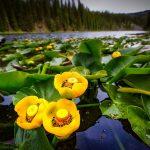 キャスリーン・E・ウッディウィス『川面に揺れる花』を読んだ感想
